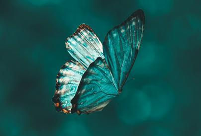 Turquoise Butterfly Image
