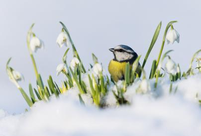An image of a bird in the snow